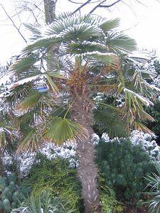palm_tree_3