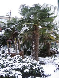 palm_trees_2