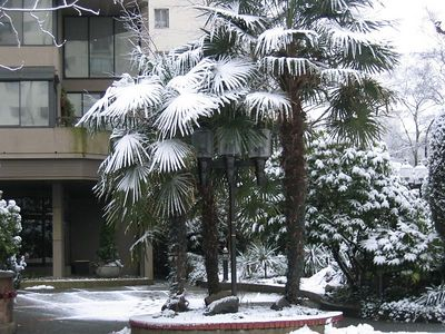 palm_trees_1