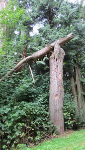 broken_tree