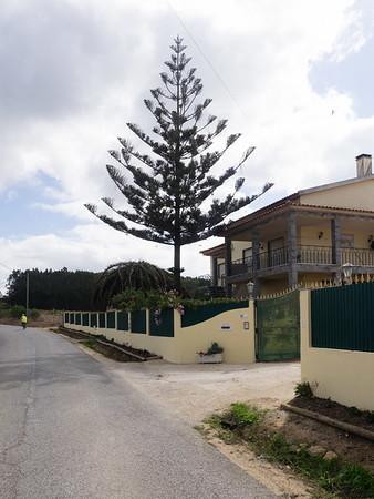 Day 4 - Ericeira to Sintra