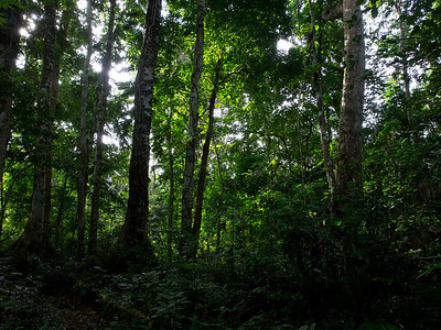 Vatthe Forest