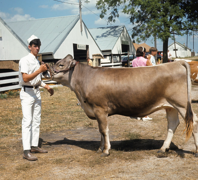 Verne Showing at the County Fair, What Cheer IA (August 1968)