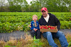 Wohletz  Farm U-Pick Strawberry Patchs, Lawrence KS (2 May 2016)