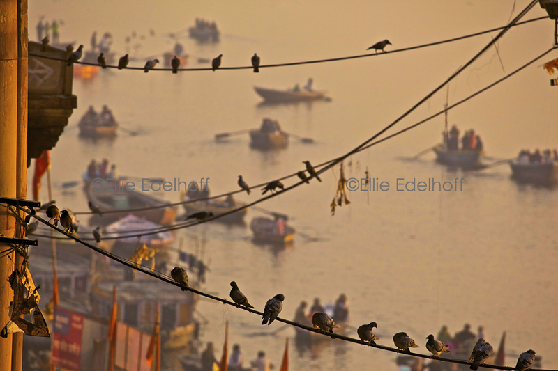 Birds on a Wire - Varanasi, India