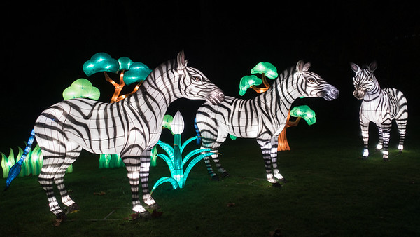 China light Zoo Antwerpen 2016.