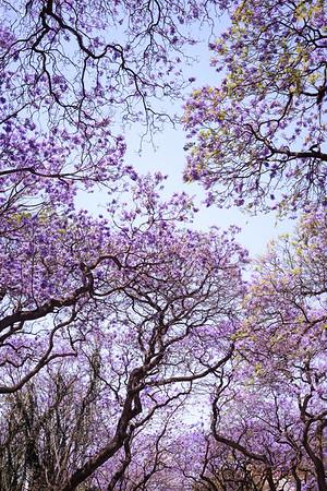 Primavera capitalina