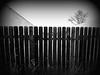 Marfa Fence