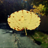 Leaf on my windshield this morning