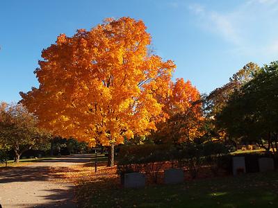 Mt. Auburn Cemetery 2009