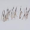 Cattail in Winter