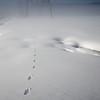 Tracks in Winter
