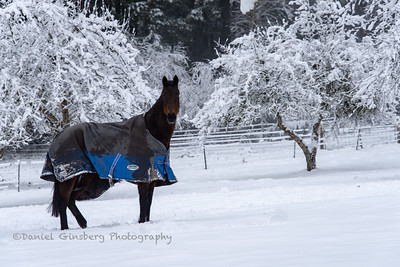 An old house, a dark colored horse, trees, and snow.
