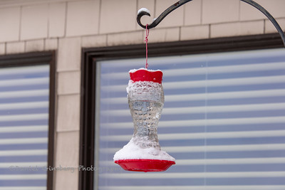 Frozen hummingbird feeder.