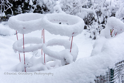 Steel wire support for tomatos covered in snow.