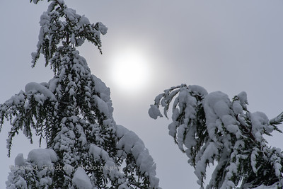 The sun shining through the clouds between two snow covered trees.