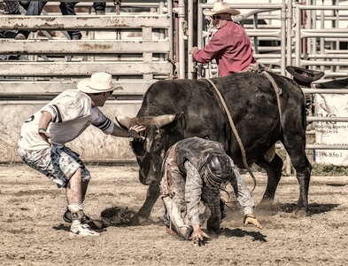 Bull Fighter. Received honourable mention in the Rodeo category of the Calgary Stampede Photo Contest - 2013. Created using the Google-NIK plug-ins in combination with Photoshop.