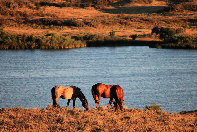 Horses taken close to Ritzville, Washington
