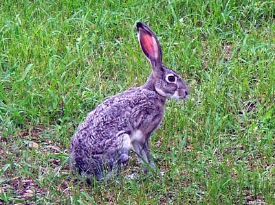 Big Bunny PICT0002 (2)