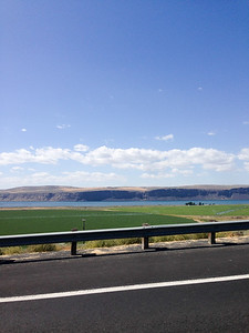 Coulee City, WA (Banks Lake) Alfafa Field