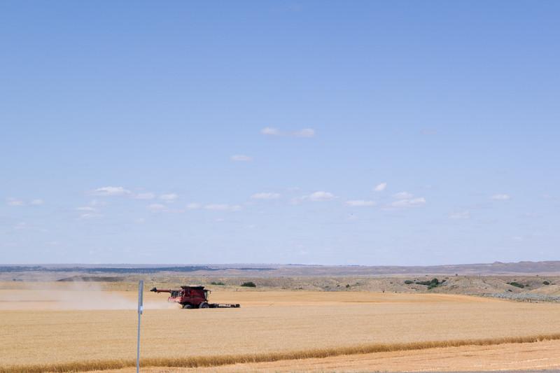 Wheat Harvest - Eastern Montana