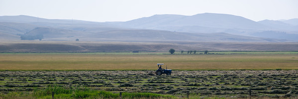 Raking Hay In Montana