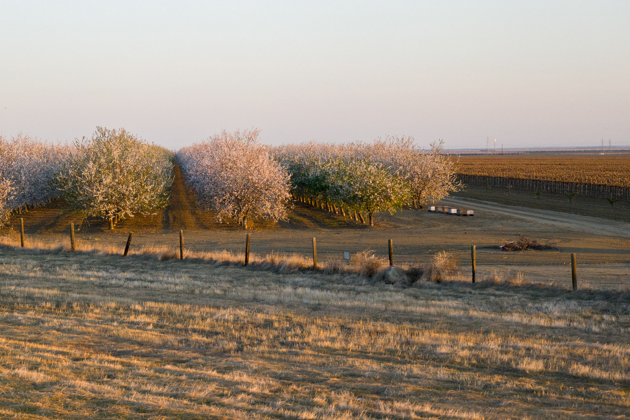 Blooming Trees And Bee Hives