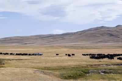 Feeding Time In Montana