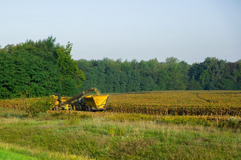 Ohio Corn Harvest