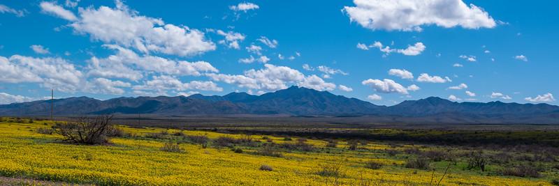 Southern Arizona Spring FLowers