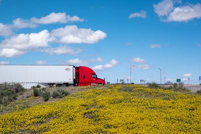 Arizona Spring Flowers Holland Truck
