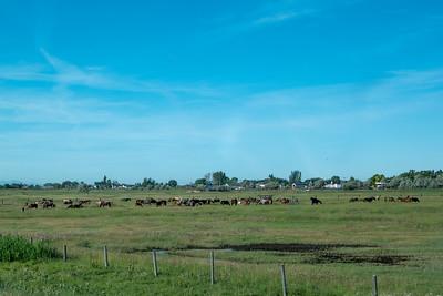 Horses Near Brigham City, UT