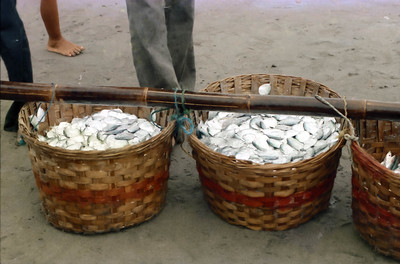 Baskets of fish for auction