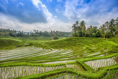 Subak (Woven) Rice Terrace Landscape