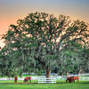 DSC01352 David Scarola Photography, Ocala Florida, DEc 2018