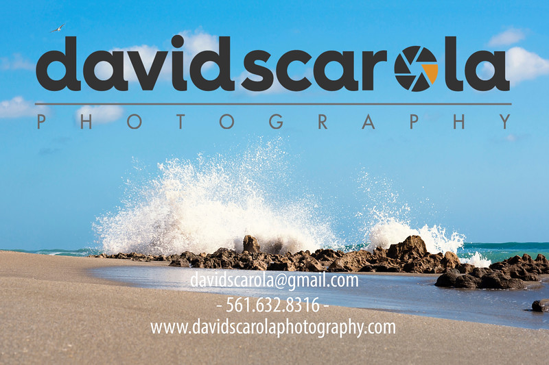 DSC08725 David Scarola Photography, Sep 2017