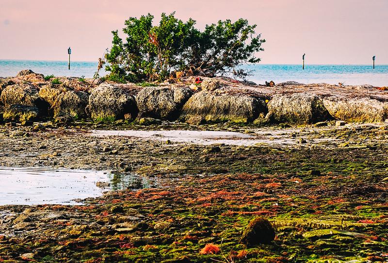 DSC08726 David Scarola Photography, Key West