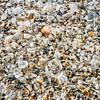 DSC08687 David Scarola Photography, Jupiter Island Seashells on the Seashore, Jupiter Florida
