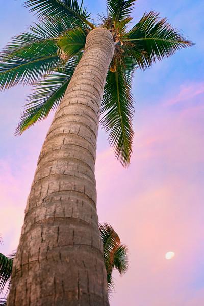 DSC09154 David Scarola Photography, Key West