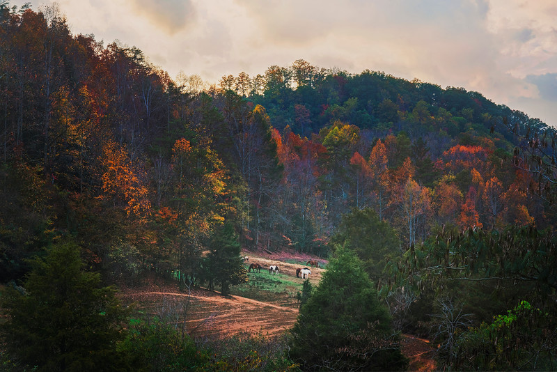 DSC03385 David Scarola Photography, Pigeon Forge Tennessee, Nov 2016