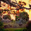 DSC02561 David Scarola photography, Prescott