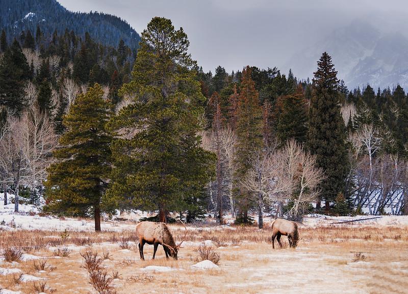 DSC00198 David Scarola Photography, Rocky Mountain National Park