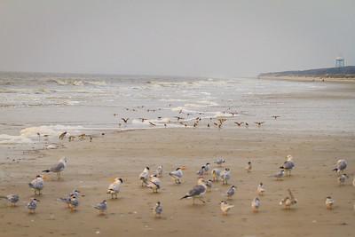 Jekyll Island Birds