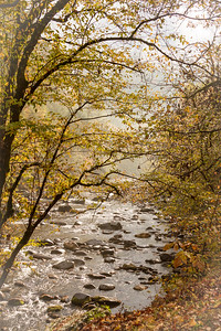 Smoky Mountain Stream in Fog