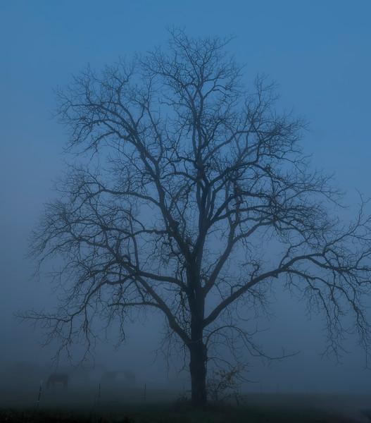 A fall foggy day drive