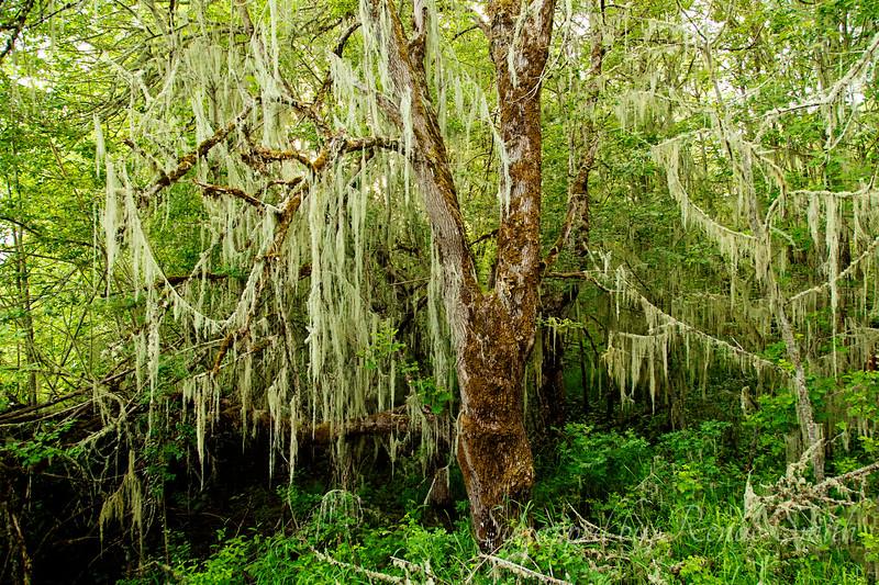 Tree Wavings
