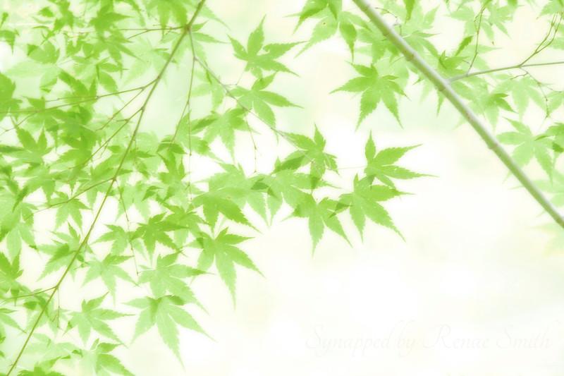 Summer Canopy