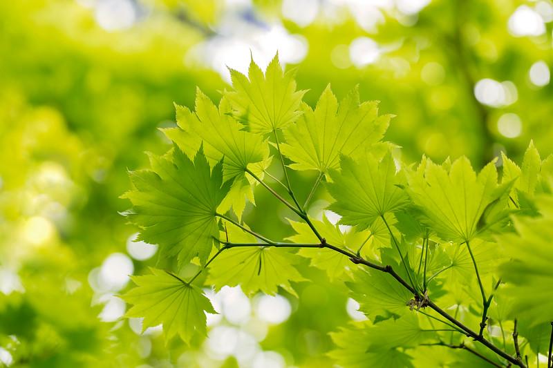 Spring Green I
