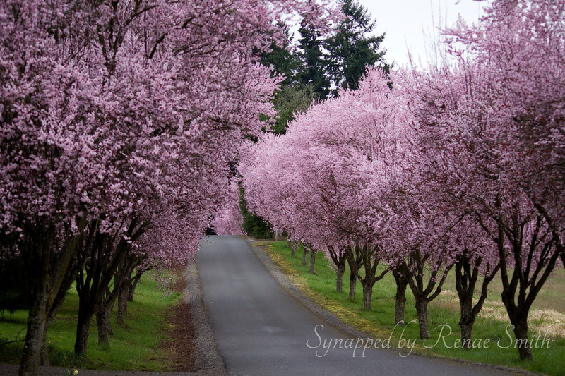 Pathway Into Spring