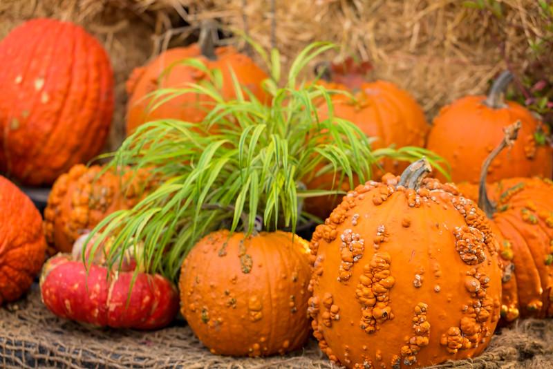 Goosebumply Pumpkins